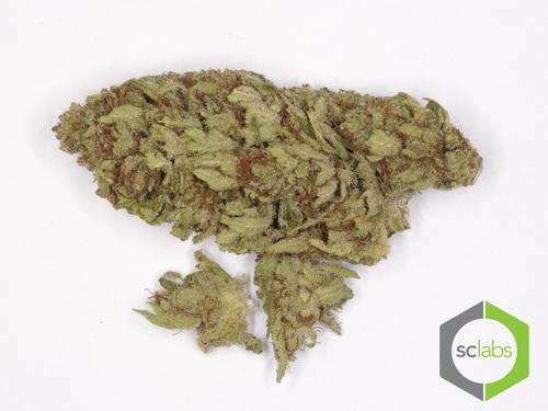 FRUIT STRIPE CBD | Kannapedia